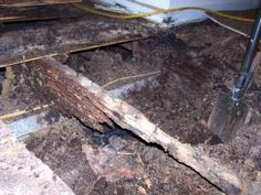 How to get rid of Termites Termite Control, Citrus Oil, Destruction, Countries, Rid, Buildings, Stage, Woodworking, How To Get