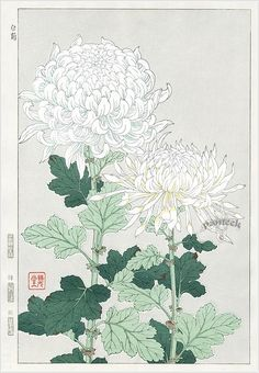 Kawarazaki Shodo Japanese Woodblock Print Name Shiragiku (White chrysanthemum) Approx Image Size Height cm x Width cm (H x Art And Illustration, Illustrations, Botanical Drawings, Botanical Prints, Japanese Flowers, Japanese Painting, Chinese Painting, Japanese Prints, Japan Art