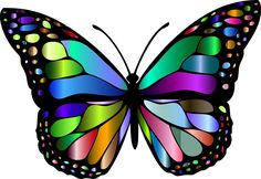 Butterfly Coloring Pages Beautiful butterflies Coloring Book Cutout Png & Clipart Images Butterfly Coloring Page, Butterfly Clip Art, Butterfly Drawing, Rainbow Butterfly, Butterfly Pictures, Butterfly Painting, Butterfly Wallpaper, Monarch Butterfly, Art Papillon