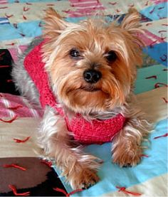 'Raspberry Fool' Crocheted Dog Sweater
