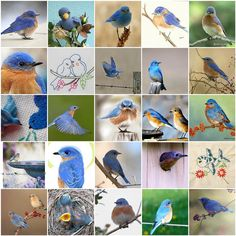 Things I Love Thursday -- Bluebirds | Flickr - Photo Sharing!