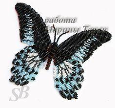 Схема бабочки Парусник Полимнестор.