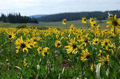 Alpine Loop Nature Trail | Cedar Breaks National Monument | Southern Utah | The Salt Project | Things to do in Utah with kids