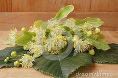 Medicinal plants - linden flower (Tilia europea)