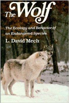 arctic essay wolf