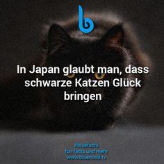 Katzen Fakt 11