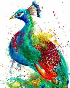 Watercolour Peacock painting by Astrid Brisson #peacock #pavo #pavoreal…