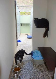 Midtown Pet Centre is the Gold Coast's premier pet motel. Our purpose built, luxury cattery is the ultimate holiday retreat for our feline guests. Cattery, Gold Coast, Centre, Pets