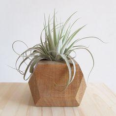 Wood + Air Plant VIVARIUM Vivarium, Air Plants, Planter Pots, Succulents, Wood, Woodwind Instrument, Timber Wood, Succulent Plants, Trees