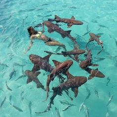 In The Exumas You Can Swim With Sharks Meet Our Pet