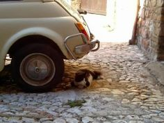 Panicale Italy http://catailments1.blogspot.com/2013/11/cat-from-panicale-italy.html