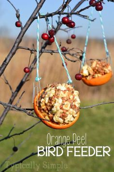 orange peel bird feeder, crafts, outdoor living, pets animals