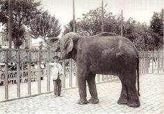 L'Avi, un elefant d'origen asiàtic, va ser un dels personatges més coneguts de la Barcelona del tombant de segle. En poc temps es va convertir en el principal atractiu del nou Zoo de Barcelona, inaugurat durant les festes de la Mercè de 1892 al recinte que havia acollit l'Exposició de 1888.