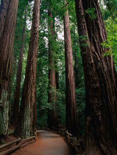 Muir Woods National Monument....can't wait!