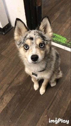 Jax patiently awaits his treat Funny Images, Best Funny Pictures, Cute Pictures, Gifs, Really Cute Dogs, Happy Birth, Cat Day, Cat Lovers, Husky