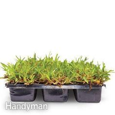 Bare patches in your yard? Growing Grass Under Trees