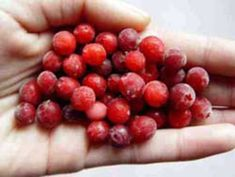 Cranberries- The Métis also gathered wild berries and edible plants. Berries were important food for the Métis. They were eaten alone, or added to a popular meal called 'Pemmican'. Berries were stored in animal skins to prevent them from going bad.