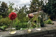 Natuurkampeerterrein Wildemansheerd Dahlia's brengen wat kleur bij Natuurkampeerterrein Wildemansheerd. Glass Vase, Decor, Decoration, Decorating, Deco