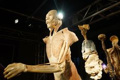 Guarda le foto su Milano, ecco Real Bodies, la mostra sul corpo umano