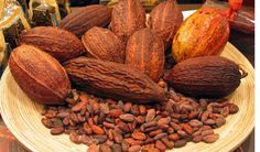 Want to buy high quality cocoa beans from Accra? Contact Gyarko Farms the leading producer of high quality cocoa beans in Ghana: http://www.asanduff.com/gyarko-farms/ #cocoabeans, #cocoaghana, #cocoafarms