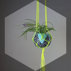 Neon Yellow Macrame Air Plant Hanging Planter with Tillandsia - Aqua, Black and White Spotted with Neon Yellow