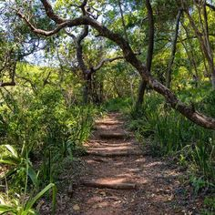 forest - Google Search Kruger National Park, Yosemite National Park, National Parks, African Jungle, Rich Image, Beach Landscape, Ways Of Seeing, Professional Photographer, South Africa