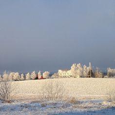Frost in Levanger -Instagram photo by @josteinson #travel #norway