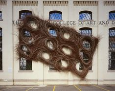 Cell Division- by Patrick Dougherty