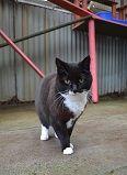 Cats Available for Adoption - Bleakholt Animal Sanctuary