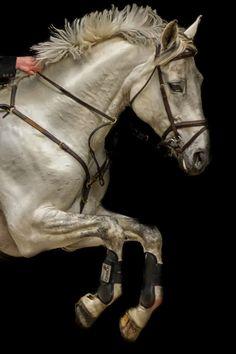 "lovenaturewildlife: "" Breathtaking Planet Earth For the horse lovers:) (via 500px / White horse by Erik… via Tumblr """