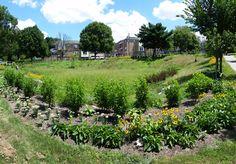 Kemble Park and Chew & Ogontz, Summer 2015