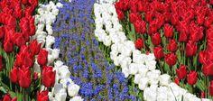 Sandnes Sentrum — En god opplevelse! Constitution Day, Flowers, Plants, Flora, Planters, Royal Icing Flowers, Flower, Blossoms, Bloemen