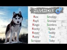 15 Ideas De Nombres De Perritos Nombres De Perros Nombres Para Mascotas Nombres Para Perros Machos