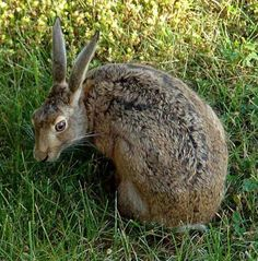 Rob Auty - 'A Hare's Tale' Book Series 6 hrs · Hare by Ansgar Walk