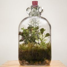 Miniature ecosystems that actually water themselves