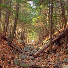 One of the best hikes ive done on the east coast. Nice shot of the Prospect Mountain trail in Lake George