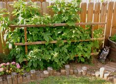 This is prettier to go at the side of the house in the front yard to trellis future raspberries