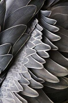 grey.quenalbertini: Grey shades