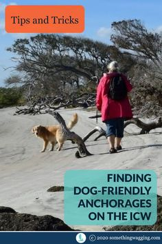 There are great dog-friendly anchorages all long the ICW. Here's my best tips for finding them yourself. Dogs On Boats, Dog Travel, Travel Tips, Great Places To Travel, Flying Dog, Living On A Boat, Dog List, Kinds Of Dogs