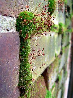brick wall and moss.