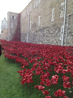 The Tower of London Planting Poppies 18/09/14