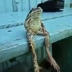 Frog Sits On Bench Like a Human