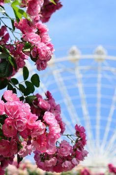 薔薇と観覧車