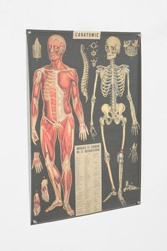 boys science room | Anatomie Poster for Science Room | Boys Rooms
