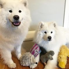 Brigitte found out I was taking a picture with Squirrel Fish Hedgie & Duck for #NationalBestFriendDay and she insisted she get in... (3 days left until my 13th Birthday Pawty!! Donate $5 to my fundraiser for my birthday! http://ift.tt/1zDCnm1)