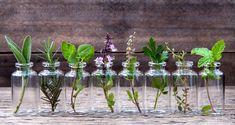 Le 25 piante che si possono coltivare facilmente in acqua