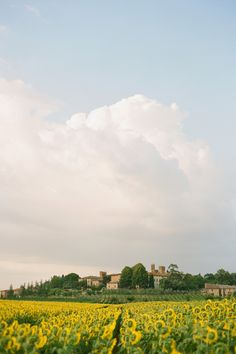 travel | tuscany, italy | ted petaja photography