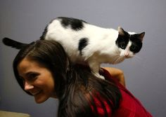 Jeanette Skaluba does yoga with Oreo the cat. Photo courtesy of Homeward Bound Pet Shelter - Decatur, Illinois