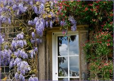 I'm itching to get some wisteria growing on my property...  Not sure how to go about it.