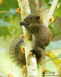 Squirrel with a cute tail!